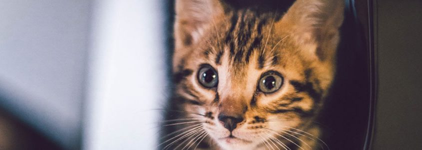 cat kidney failure natural remedies
