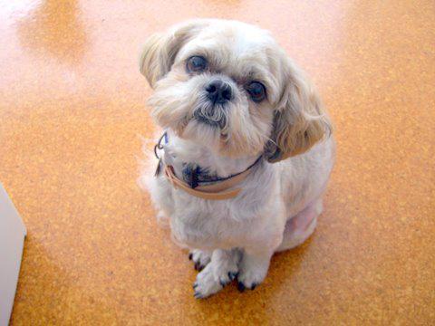 dog bladder stone treatment