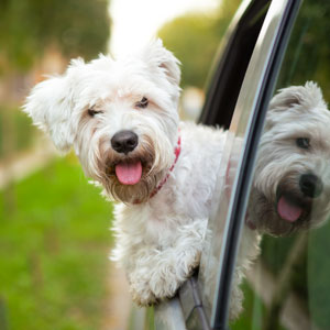 dog car sickness herbal remedies