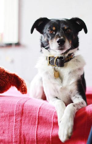 natural dog asthma treatments