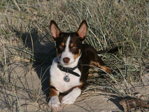 natural remedy dog skin irritation