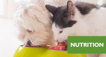 cat dog nutritionist sydney