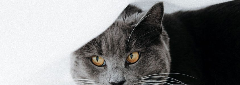 common cat diseases