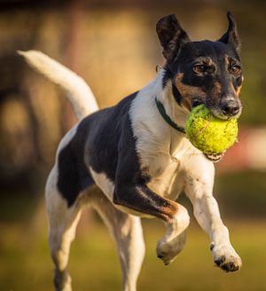dog epilepsy information