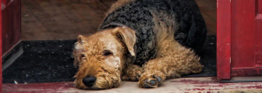 dog immunity titer testing sydney