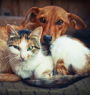 Pet immunisation - are cat & dog vaccinations safe? Are