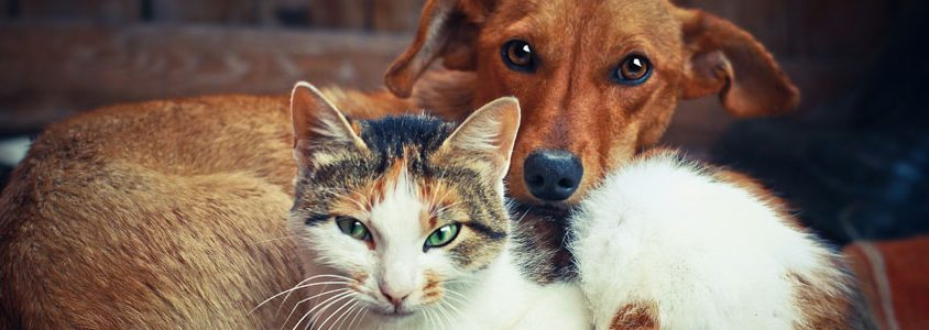 is pet immunisation safe