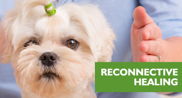 reconnective pet healing